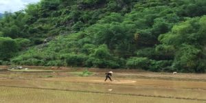 hang-village-rice-field